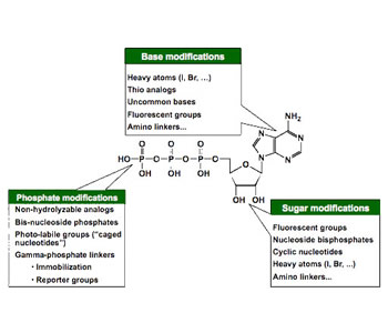 nucleoside - Carbohydrate and Nucleotide Development