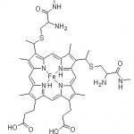 Structure of Cytochrome C CAS 9007 43 6 150x150 - Latanoprost CAS 130209-82-4(41639-74-1)