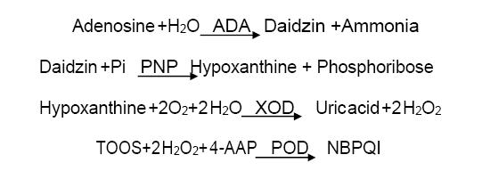 Assay Principle 2 - Adenosine Deaminase CAS 9026-93-1