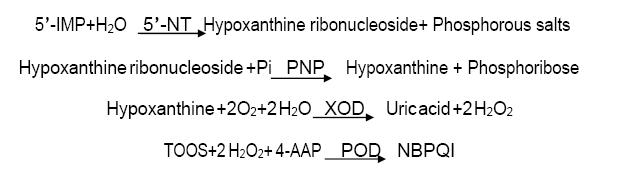 Assay Principle 3 - 5'-Nucleotidase CAS 9027-73-0