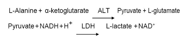 Assay Principle 7 - Alanine Aminotransferase CAS 9000-86-6