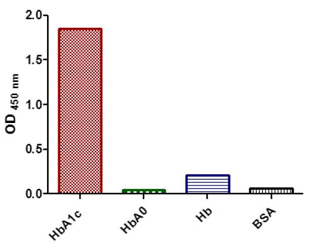 Anti HbA1c Hemoglobin CAS 9008 02 0 A1c antibody in ELISA2 - Anti-HbA1c (Hemoglobin CAS 9008-02-0 A1c) antibody