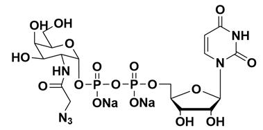 Structure of UDP GalNAz.2Na CAS 653600 61 4 - UDP-GalNAz.2Na CAS 653600-61-4