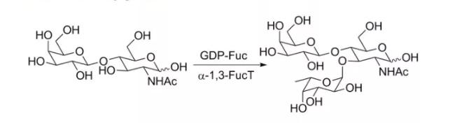 alpha1 3 fucosyltransferase alpha1 3FucT CAS 37277 69 3 EC 2.4.1.65 - alpha1, 3-fucosyltransferase; alpha1, 3FucT CAS 37277-69-3 EC 2.4.1.65