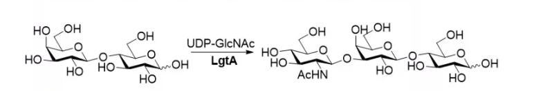 beta1 3 N acetylhexaminyltransferase LgtA CAS 37277 64 8 EC 2.4.1.56 - beta1, 3-N-acetylhexaminyltransferase; LgtA CAS 37277-64-8 EC 2.4.1.56