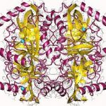 Structure of Pyrophosphatase Inorganic 9024 82 2 150x150 - About Watson