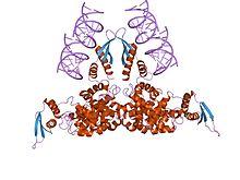 Structure of RNase III CAS UENA 0194 - Methyl 4,5-diaMino-3-fluoro-2-(phenylaMino)benzoate CAS 606144-42-7