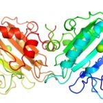 Structure of UltraNuclease CAS 9025 65 4 150x150 - 2-Isocyanatoethyl 2,6-diisocyanatocaproate CAS 69878-18-8